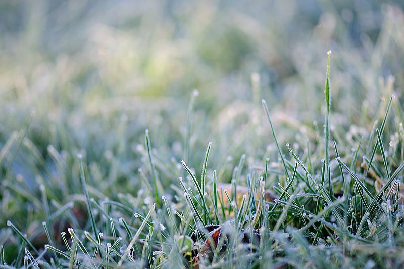 frost-f.jpg