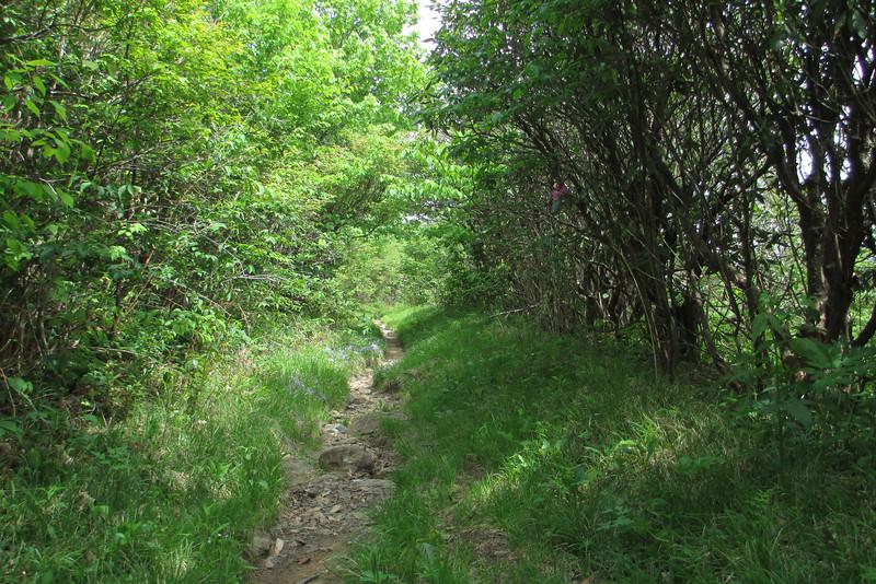 Graveyard Ridge Trail (5,420')