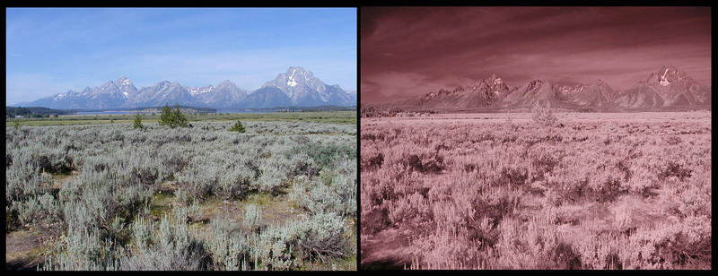 Yellowstone & The Grand Tetons