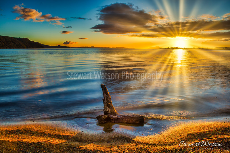 Lake Taupo log at sunrise