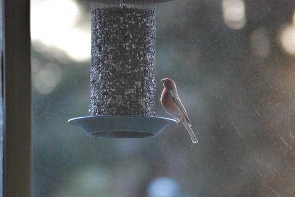 Porch Birds