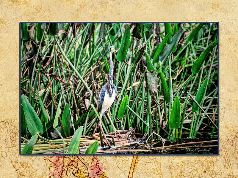LakeJessup-page10.jpg