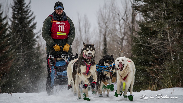 John Beargrease Sled Dog Marathon 2015