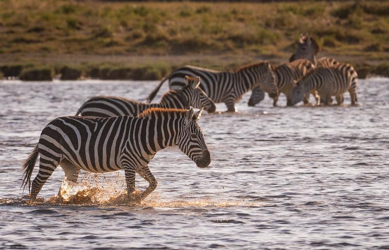Tanzania_Feb_2018-352.jpg