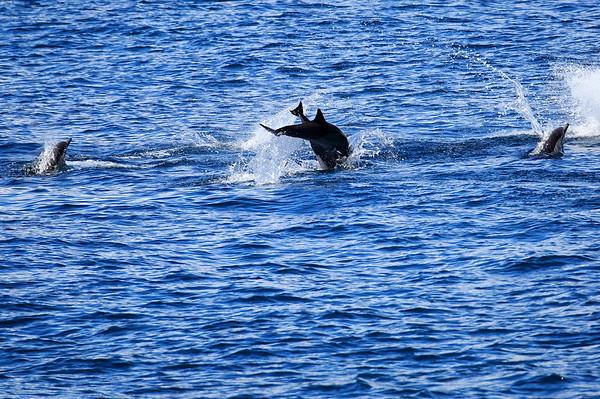 Porpoise Galapagos