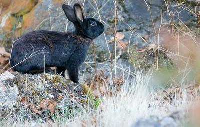 Bunnies on Mount Doug