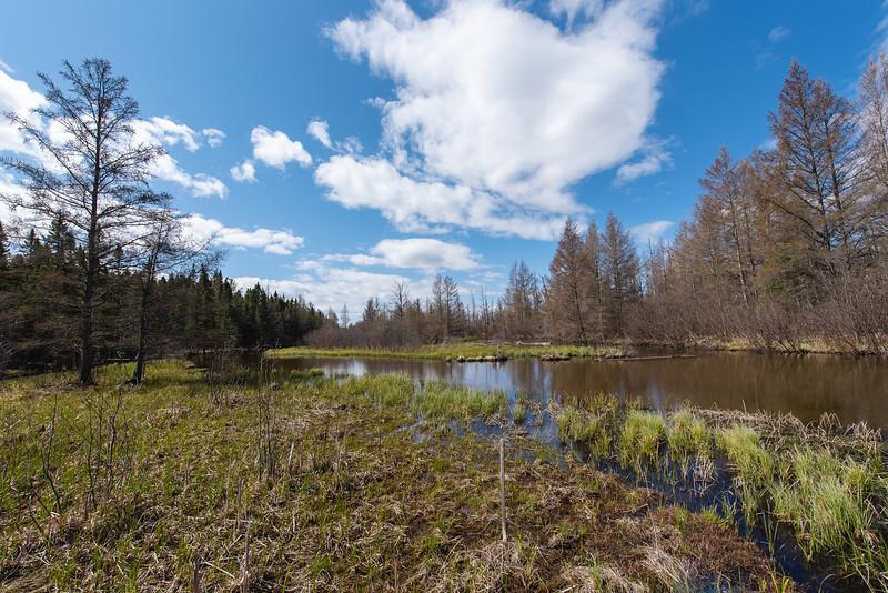HW_2487-Serenity-Pines-Ct_0019.jpg