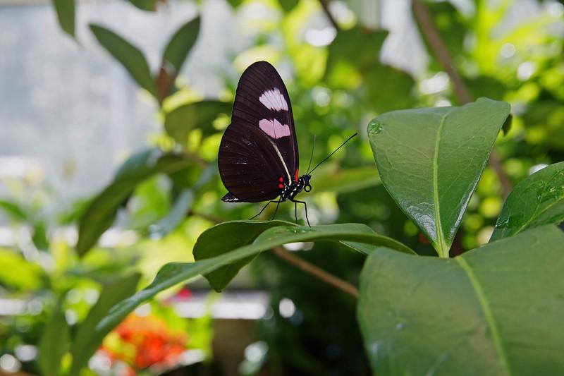 Nature 6.jpg