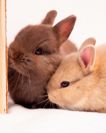 Borrowing Bunnies Project