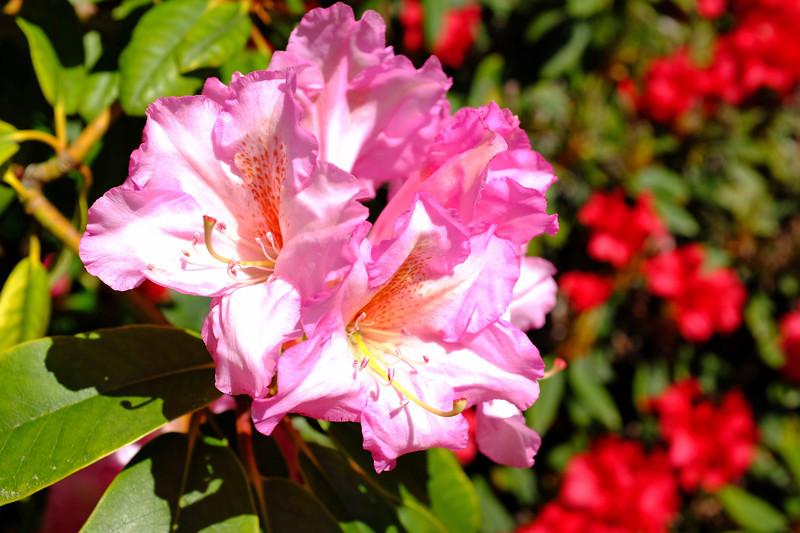 Chan Centre Flowers 3.jpg