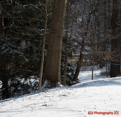 Winter at Schoephle Gardens