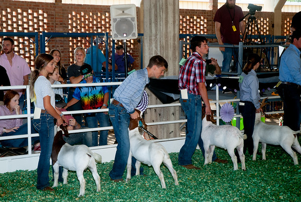 Kansas State Fair Goats 9/7/2019