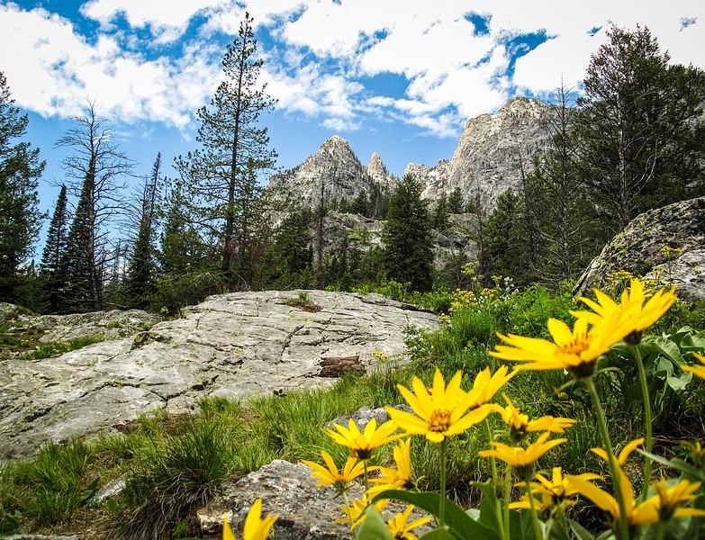 Teton Wildflowers