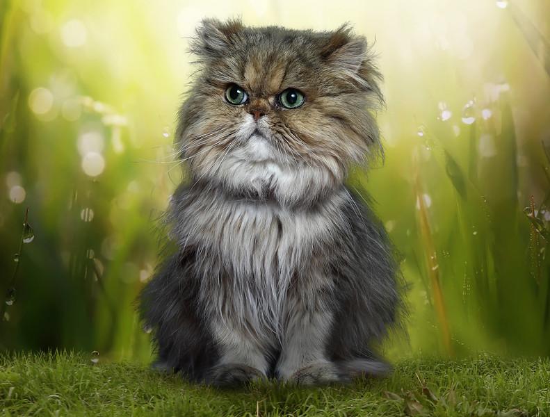 sh-cat.jpg