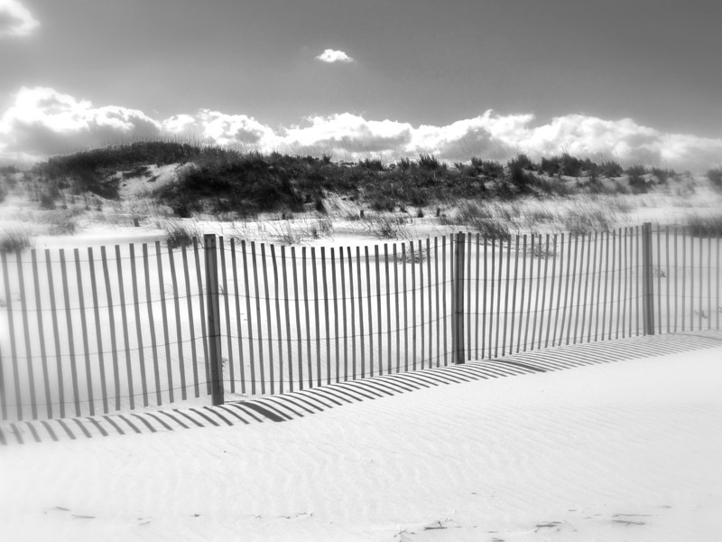 Dam Neck Beach (92).jpg