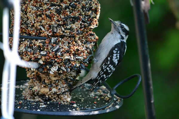 Squirrels and Birds - 07/11/14
