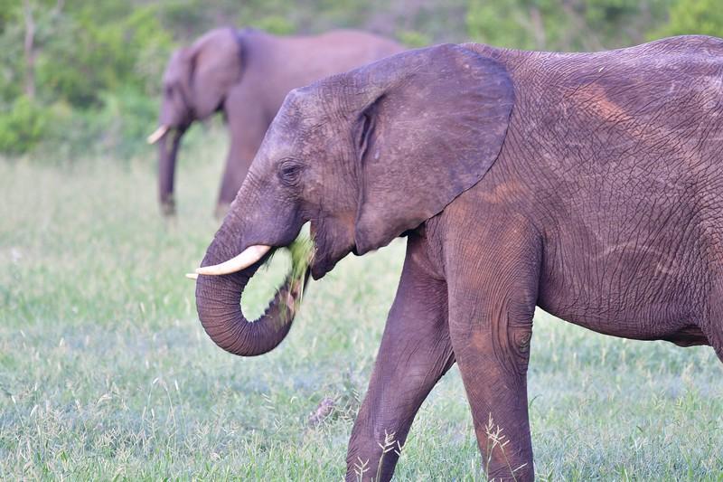 Elephant art2.jpg