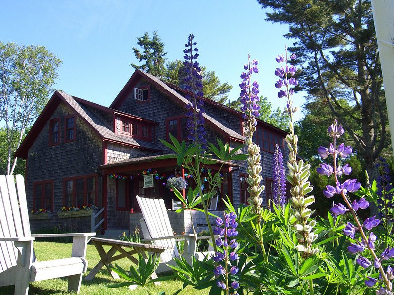cabin cove and maine lupine.jpg