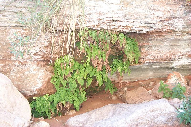 Ferns on Seep   (Jun 07, 1999, 11:44am)