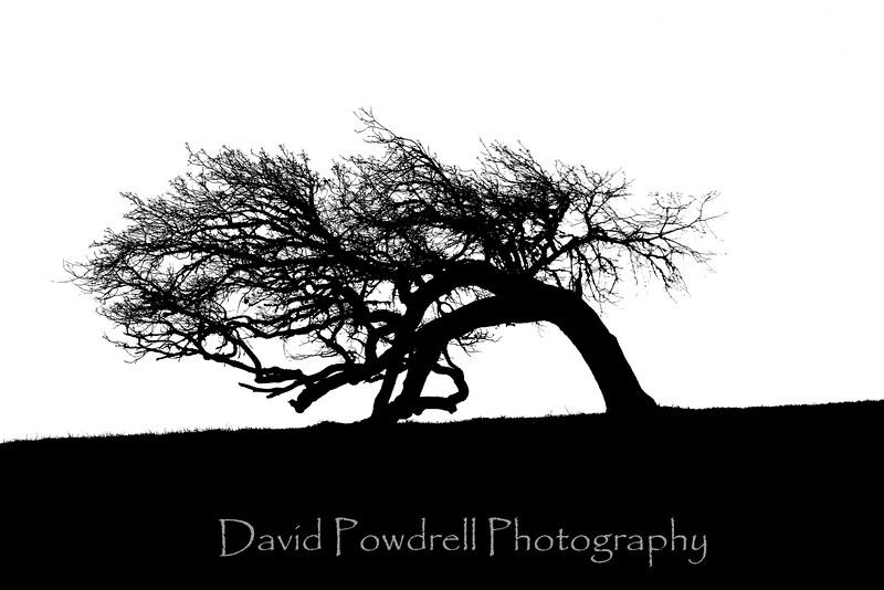1 Tree-black and white.jpg