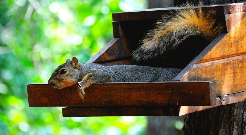Hungover squirrel.jpg