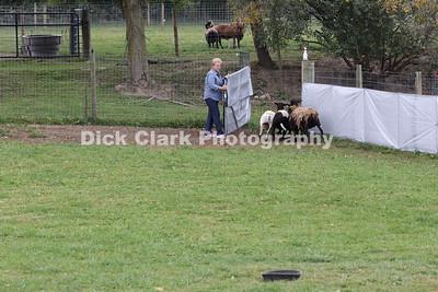 Sunday Advanced Sheep