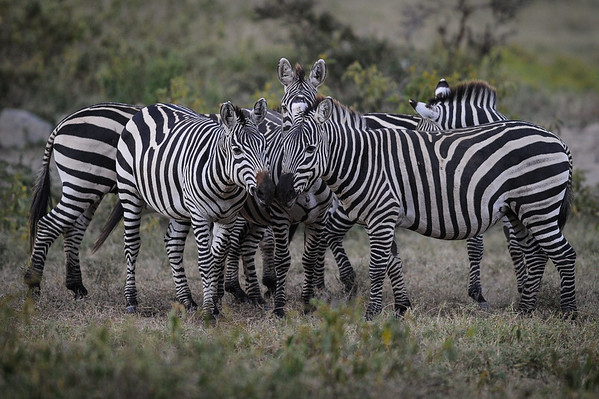 Safari in Naivasha Private Park