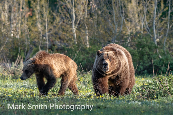 Grizzly Bear Image Gallery