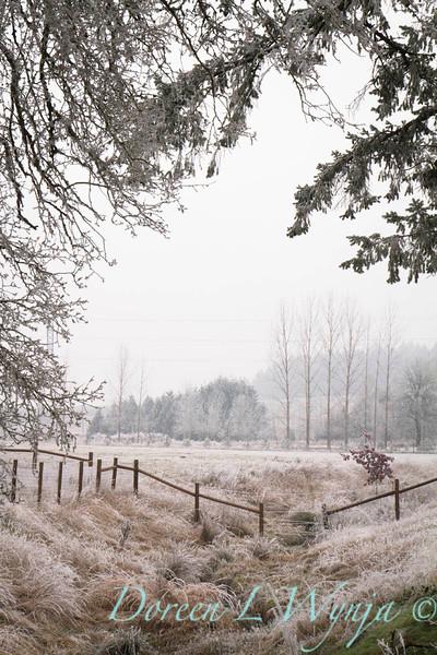 Winter frost_9435.jpg
