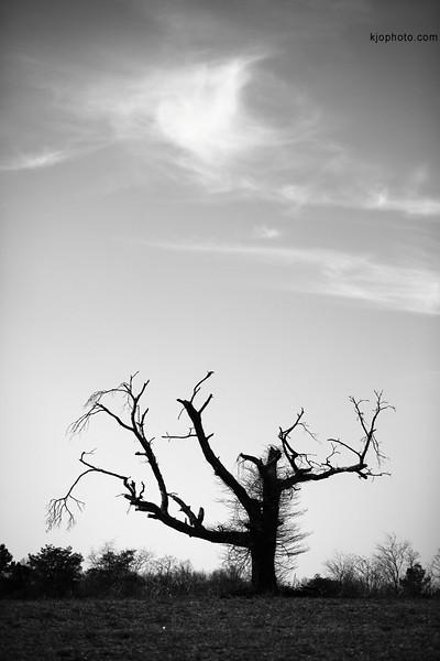 cornfield_tree.jpg