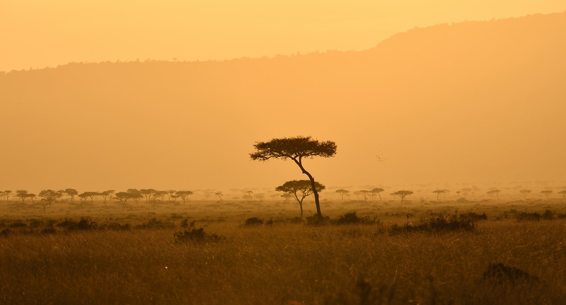 Mara Sunset Tree
