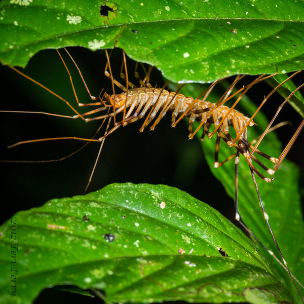 INSECT - centipede-1550.jpg