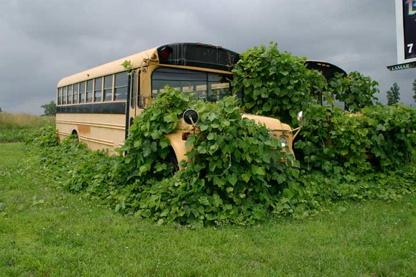 kudzu school busses 261.jpg