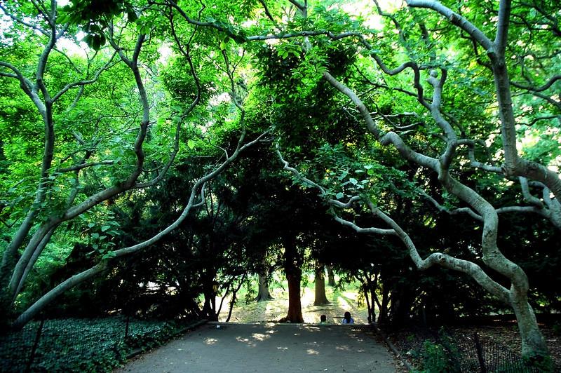Tree0392.jpg