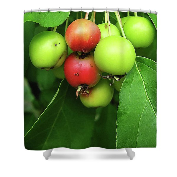 Crab Apples Shower Curtain