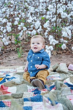 Guest - Cotton Field - 9.2017