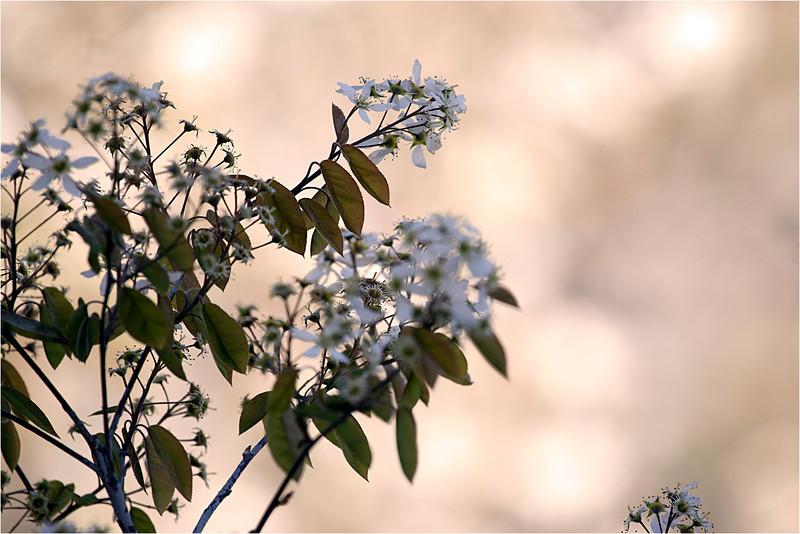 20120405_flower.jpg
