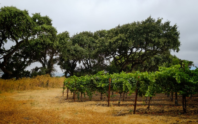 Sojourn Vineyard Images 2020
