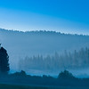 Wawona Morning Fog