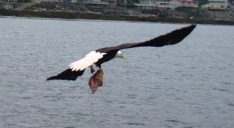 Alaska 2013 056.JPG
