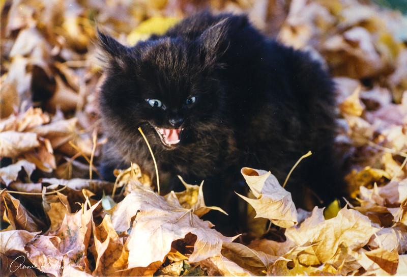 Rubens_Halloween Cat.jpg