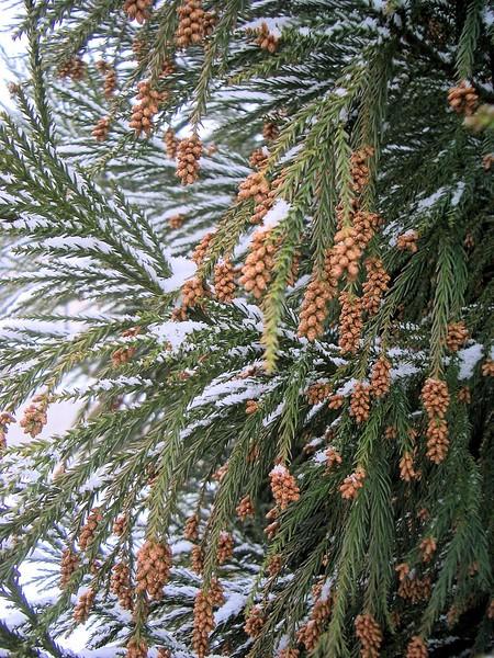 chapel_hill_snow_feb_2007_2_009.jpg