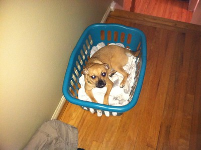 082213 maggie in the basket
