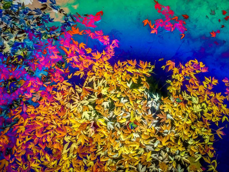 fall-leaves-002