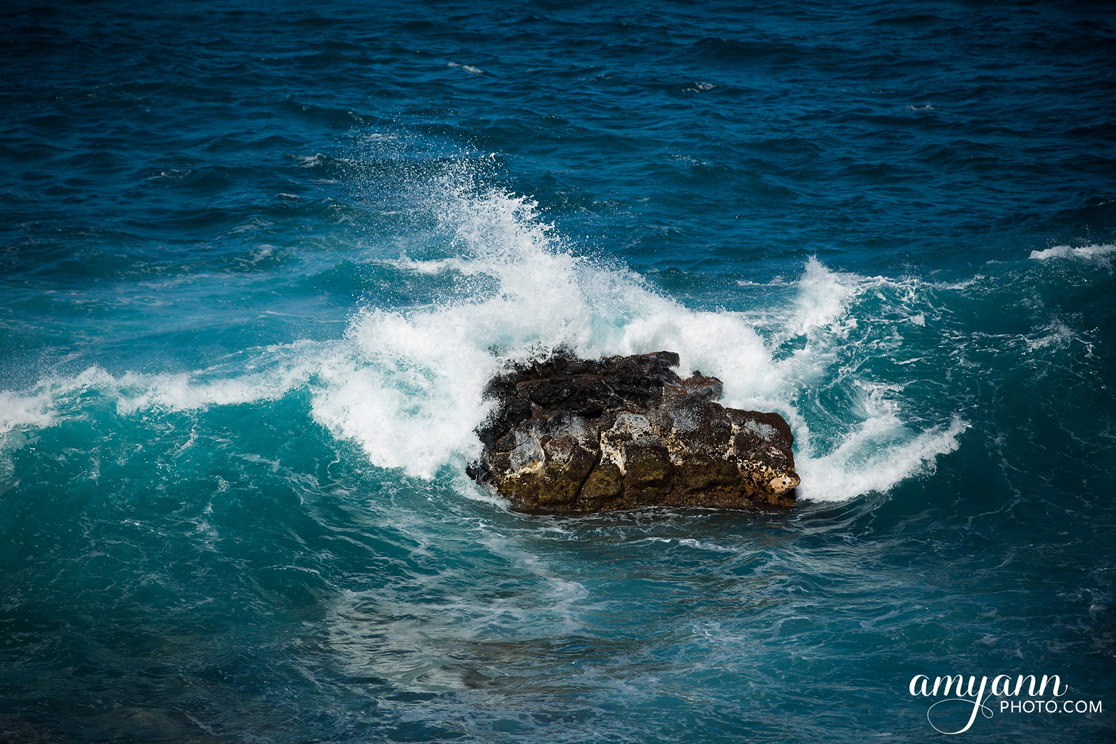 hawaii_amyannphoto_19