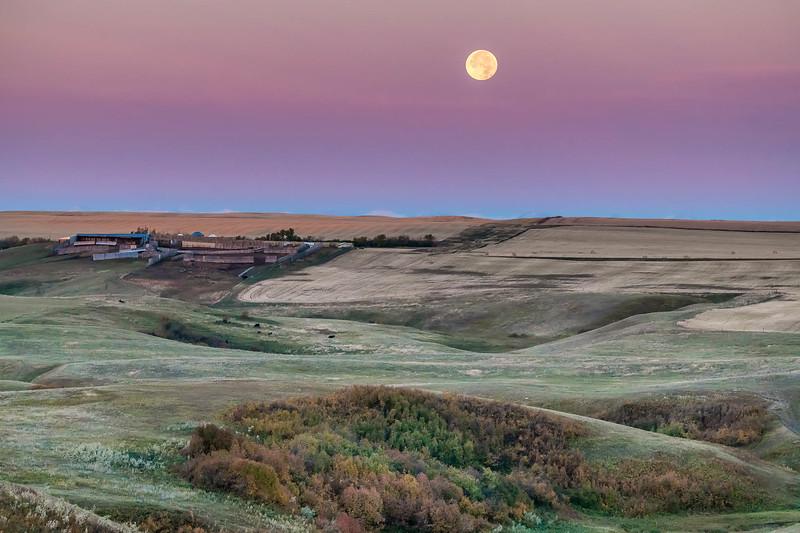 barley 55.jpg
