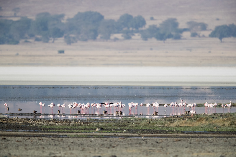 Africa - 101816 - 5976.jpg