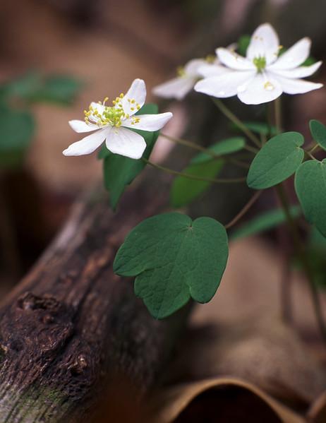 whiteflower2.jpg