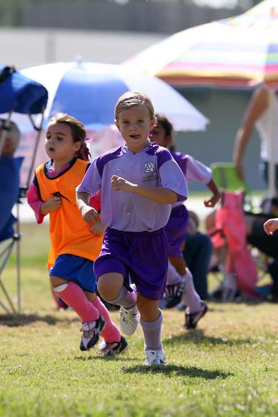 Purple Tigers