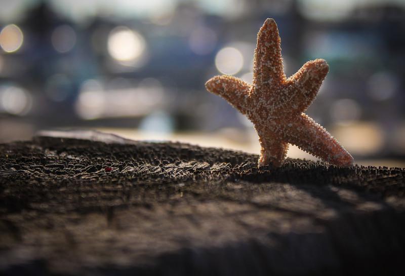 starfish2-1.jpg